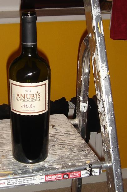 Anubis Malbec on some step ladders (for some reason)